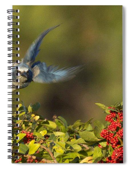 Flying Florida Scrub Jay Photo Spiral Notebook