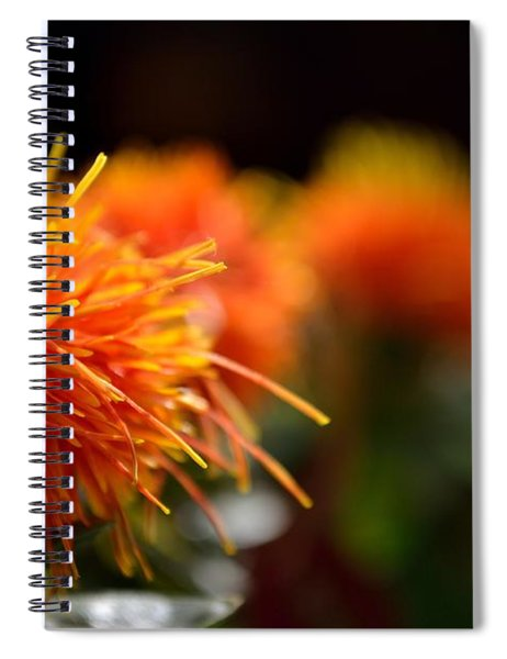 Spiral Notebook featuring the photograph Focused Safflower by Scott Lyons