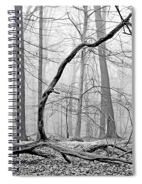 Foggy Morning Deciduous Forest Spiral Notebook