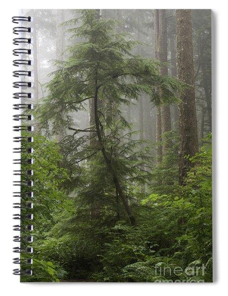 Foggy Woods Spiral Notebook
