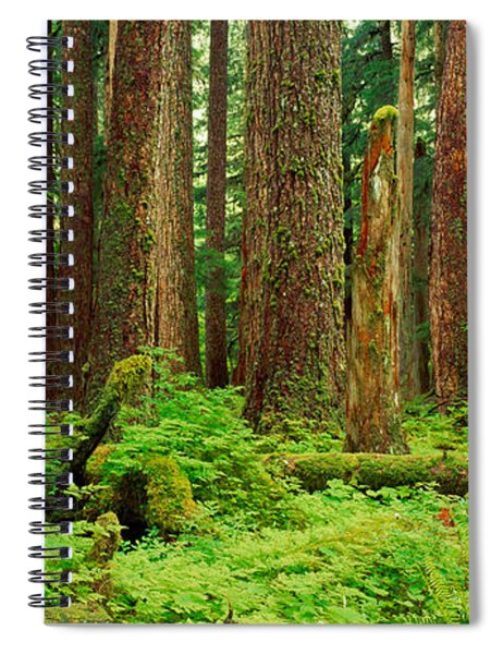 Forest Floor Olympic National Park Wa Spiral Notebook