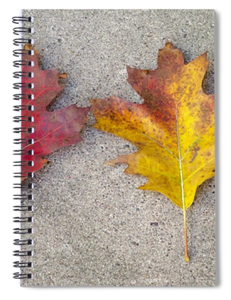 Four Autumn Leaves Spiral Notebook