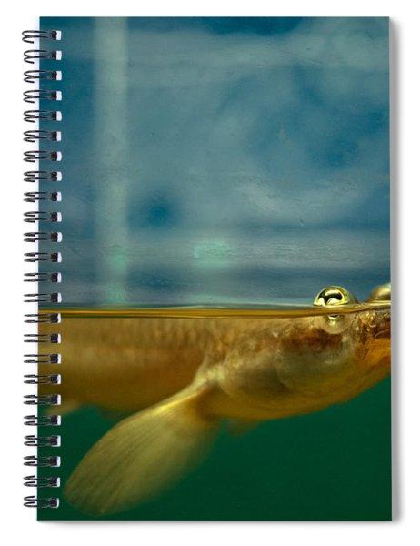 Four Eyes Spiral Notebook