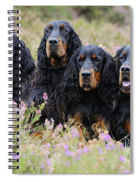 Four Gordon Setters Spiral Notebook