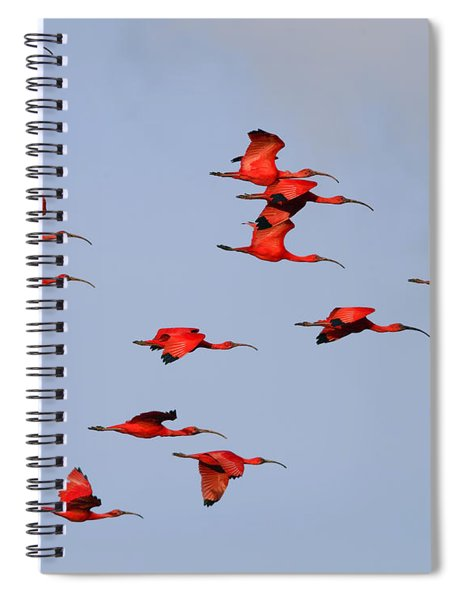 Frankly Scarlet Spiral Notebook