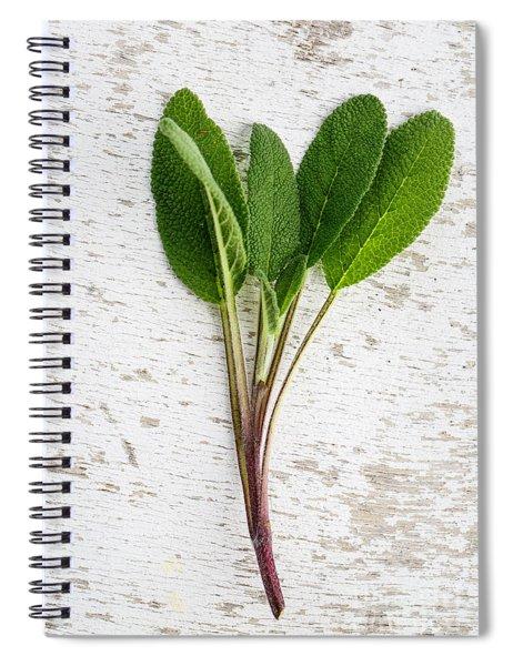 Fresh Sage Spiral Notebook by Nailia Schwarz