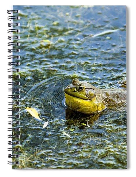 Frog Song Spiral Notebook