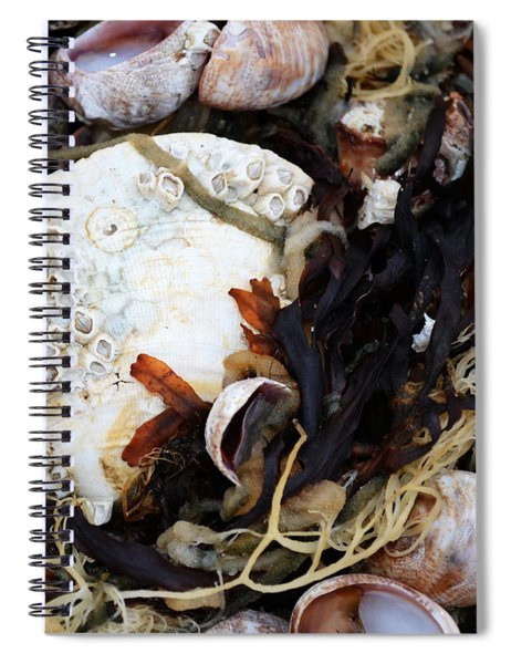 From The Ocean Spiral Notebook