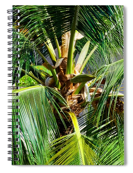 Fronds And Center Spiral Notebook