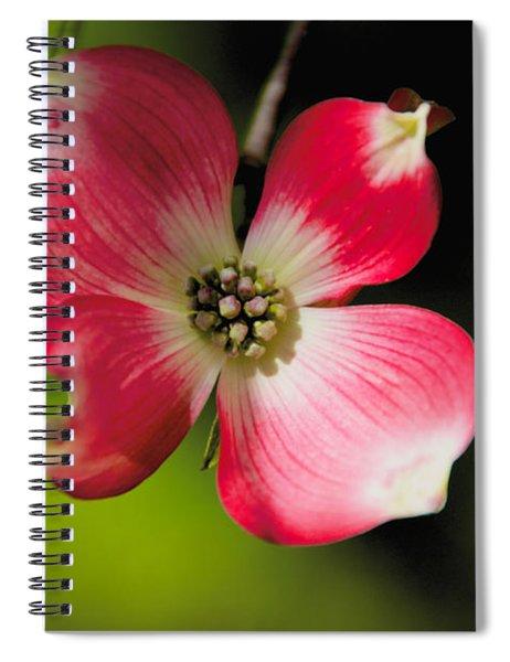 Fruit Tree Flower Spiral Notebook