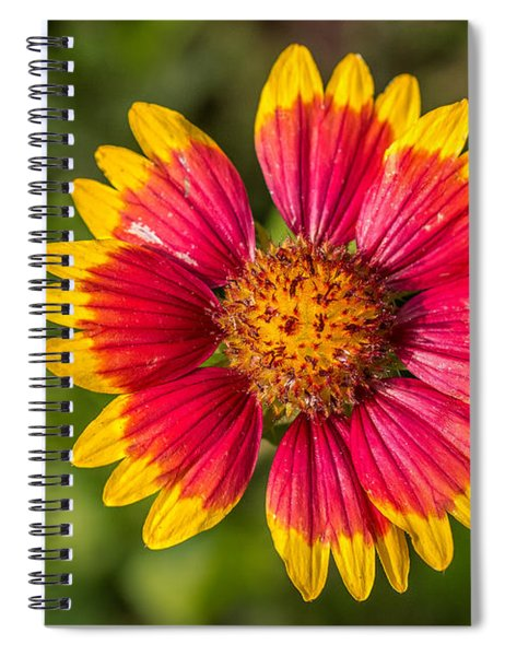 Gaillardia Shows Off Spiral Notebook