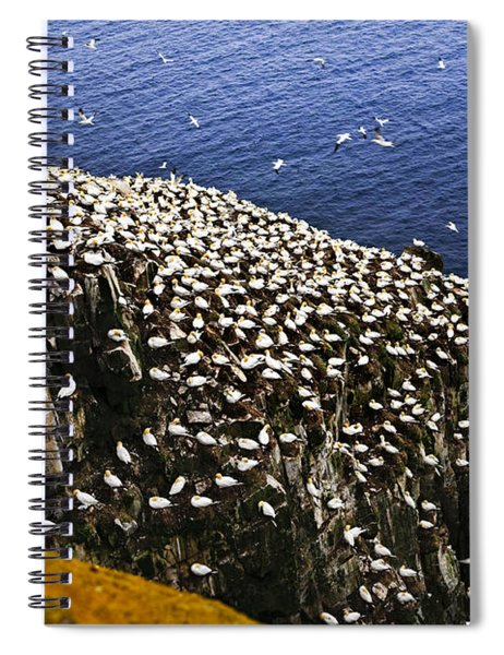 Gannets At Cape St. Mary's Ecological Bird Sanctuary Spiral Notebook