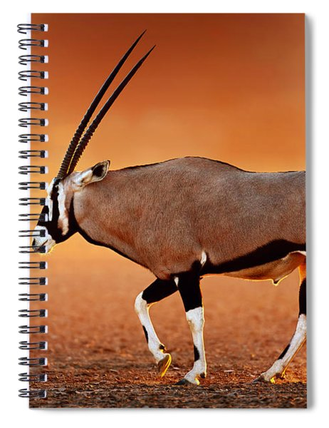 Gemsbok On Desert Plains At Sunset Spiral Notebook