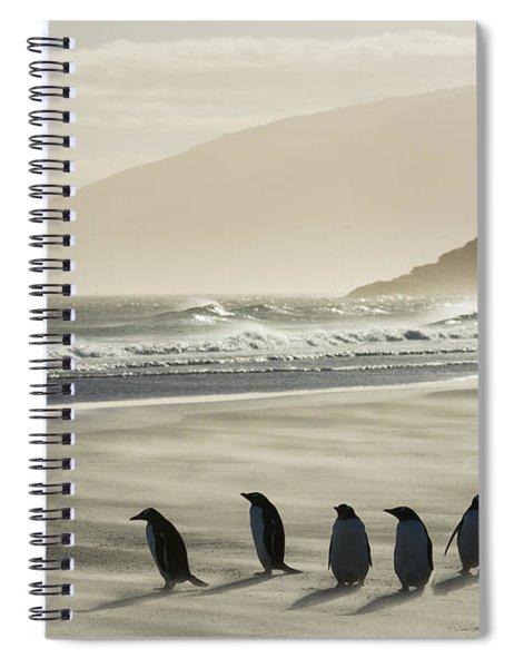 Gentoo Penguins On Beach In Wind Storm Spiral Notebook