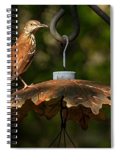 Georgia State Bird - Brown Thrasher Spiral Notebook