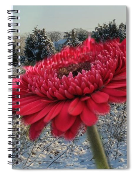 Gerbera Daisy In The Snow Spiral Notebook