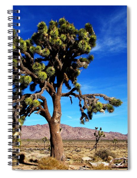 Giant Joshua Spiral Notebook