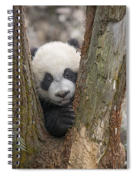 Giant Panda Cub Bifengxia Panda Base Spiral Notebook