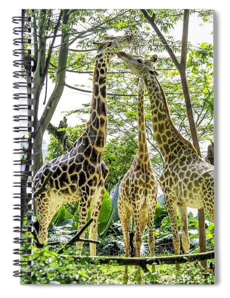 Giraffe Family Spiral Notebook