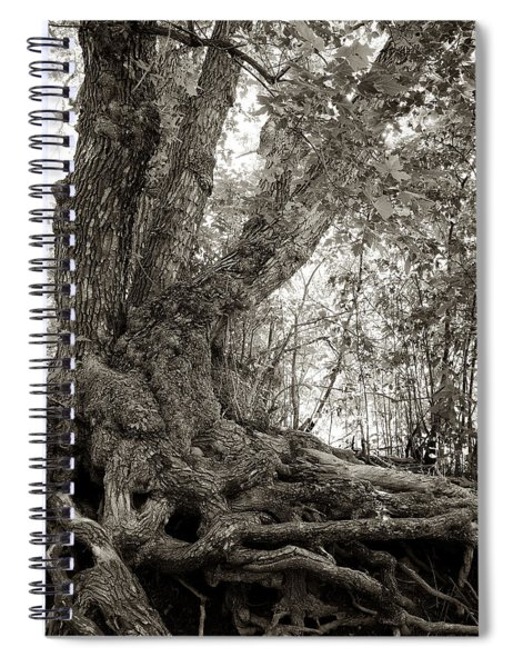 Gnarled Tree Spiral Notebook