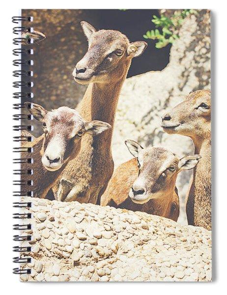 Goats On A Rock Spiral Notebook