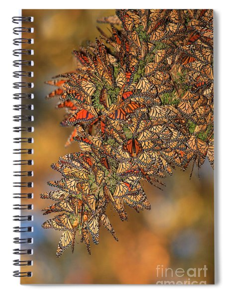 Golden Cluster Spiral Notebook
