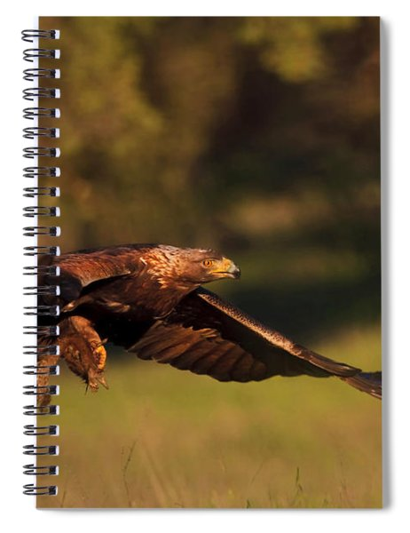 Golden Eagle On The Hunt Spiral Notebook