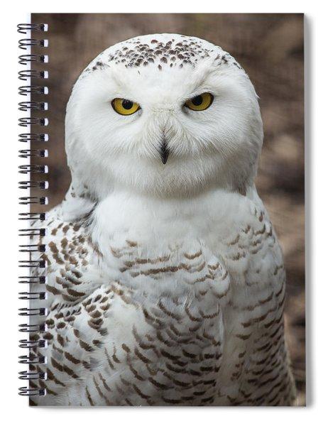 Golden Eye Spiral Notebook