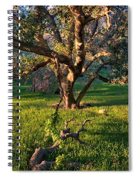 Golden Oak Spiral Notebook