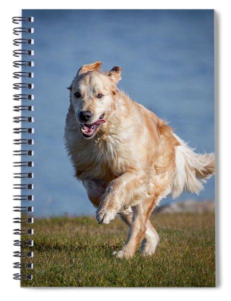 Golden Retriever Running. Young Male Spiral Notebook