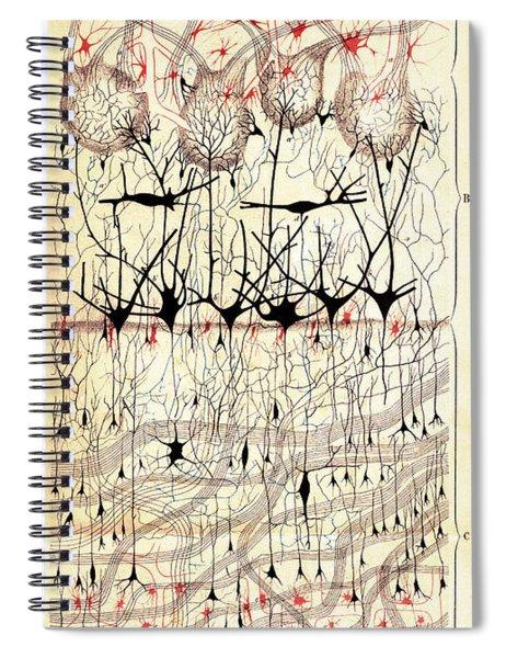Golgi Olfactory Bulb Of Dog Spiral Notebook