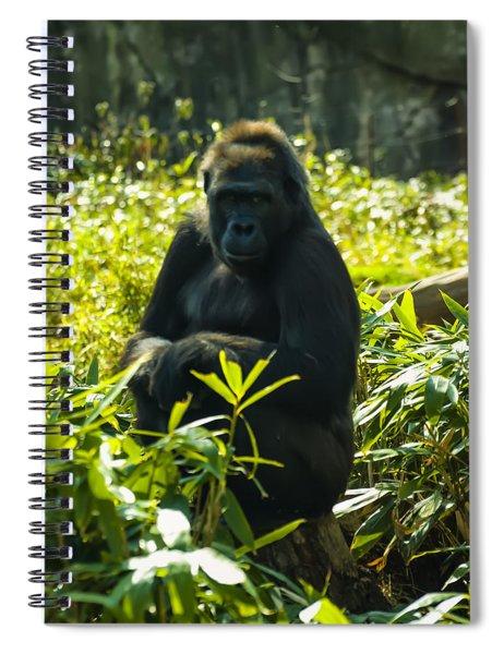 Gorilla Sitting On A Stump Spiral Notebook