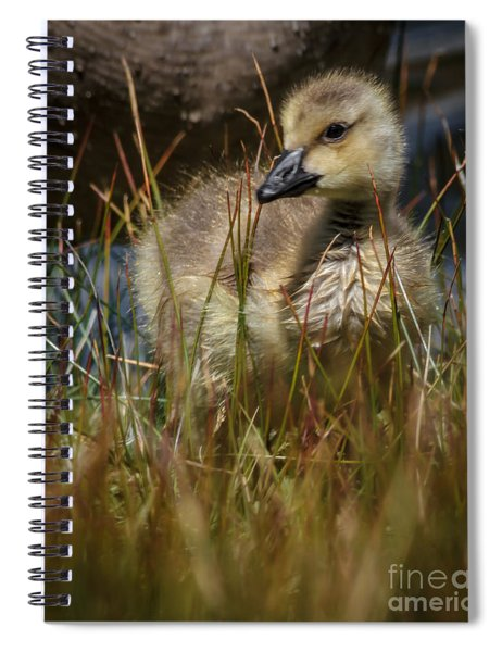 Gosling 2 Spiral Notebook
