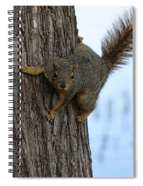 Lookin' For Nuts Spiral Notebook