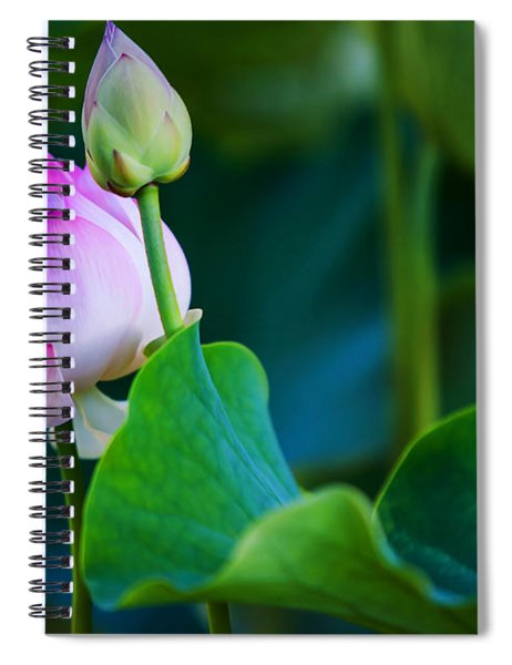 Graceful Lotus. Pamplemousses Botanical Garden. Mauritius Spiral Notebook
