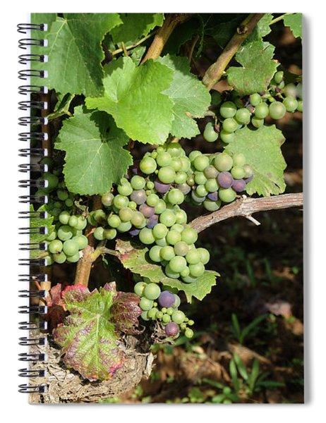 Grapevine. Burgundy. France. Europe Spiral Notebook