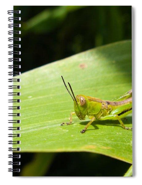 Grasshopper On Corn Leaf   Spiral Notebook