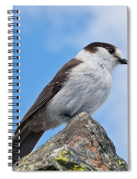 Gray Jay With Blue Sky Background Spiral Notebook