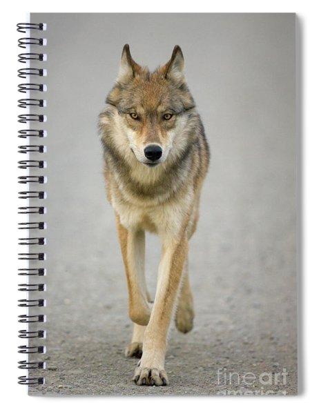 Gray Wolf Denali National Park Alaska Spiral Notebook