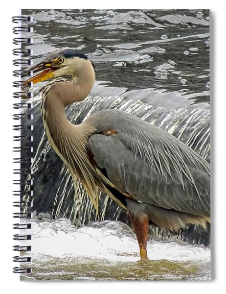 Great Blue Heron With Fish Spiral Notebook