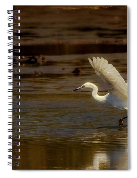 Great Egret Taking Off Spiral Notebook