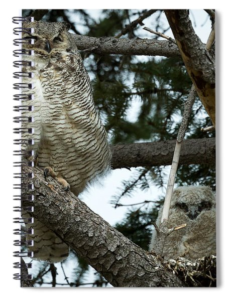 Great Horned Owls Spiral Notebook