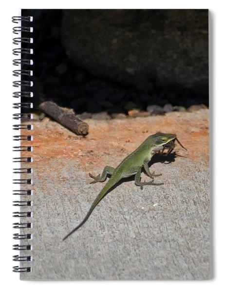 Green Anole Lizard Vs Wolf Spider  Spiral Notebook