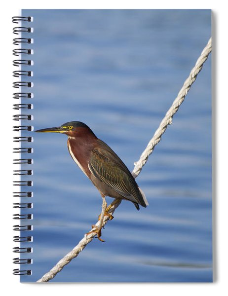Green Back Heron Spiral Notebook