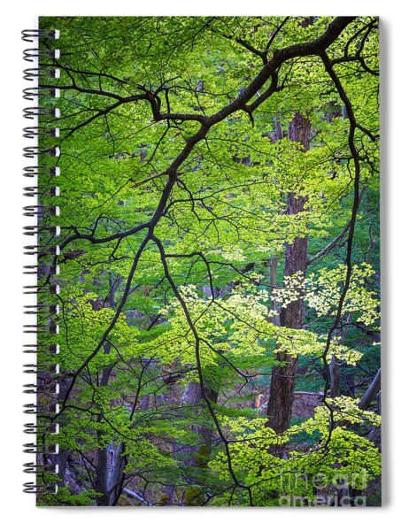 Green Explosion Spiral Notebook
