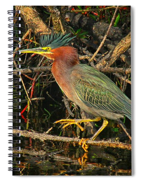 Green Heron Basking In Sunlight Spiral Notebook