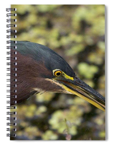 Green Heron Fishing Spiral Notebook