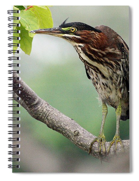 Green Heron In Sumac Spiral Notebook