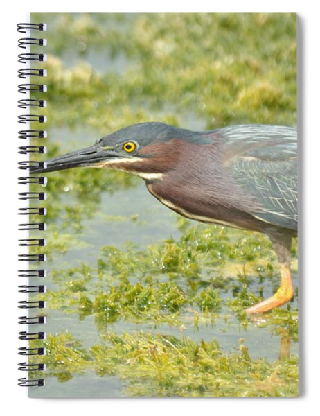 Green Heron On The Hunt Spiral Notebook