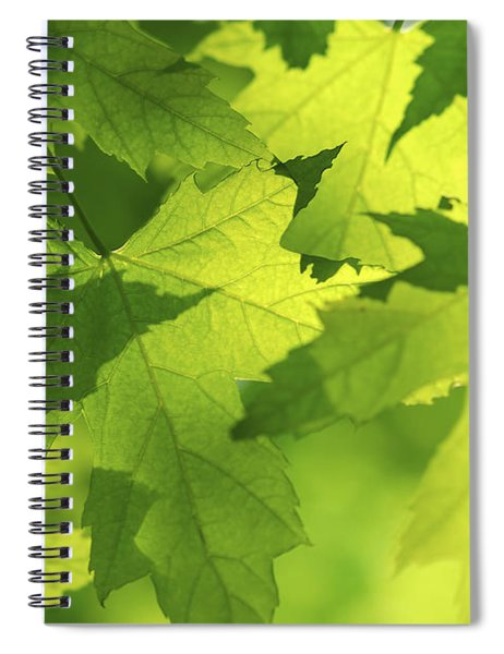 Green Maple Leaves Spiral Notebook